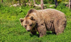 Medved napao staricu kod Ljubljane