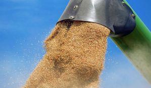 Manji rod pšenice ove godine