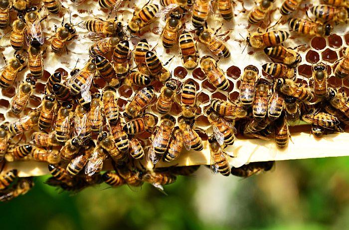 Košnice prazne, pčelari traže pomoć države