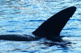 Španskim brodovima naređeno da zaobilaze deo obale zbog kitova ubica