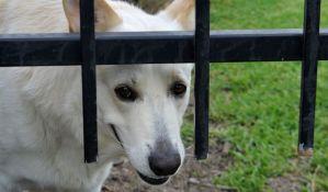 Subotica: Uhapšen pedesetogodišnjak zbog zlostavljanja pasa