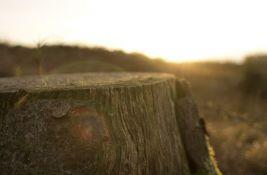 Naučnici o uništavanju šuma: Za 40 godina doći će do kolapsa života