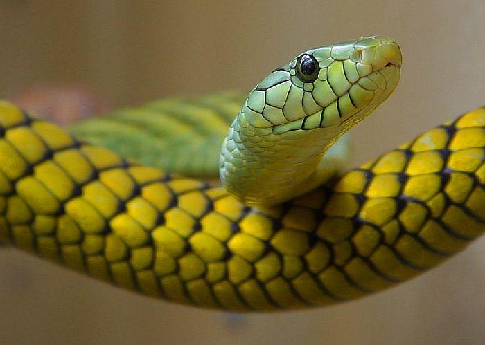Kupio zelenu salatu u supermarketu i u njoj pronašao otrovnu zmiju
