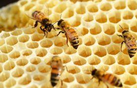 Pčele na krovu gradske kuće u Beču godišnje proizvedu 180 kilograma meda