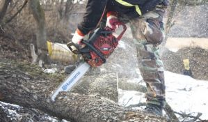 Bačko Petrovo Selo: Uhapšeni zbog seče drveća i šumske krađe