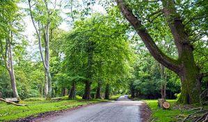Britanci sade 130.000 stabala u borbi protiv klimatskih promena