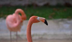 Festival flamingosa i drugih ptica održan u Turskoj
