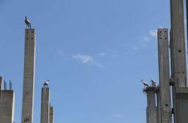 FOTO, VIDEO: Najlepša kolonija roda u Novom Sadu, gnezda na golim stubovima propale investicije