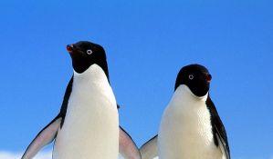 Broj pingvina na Antarktiku drastično opada