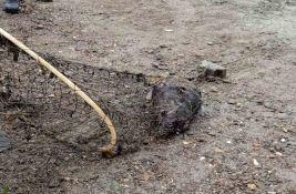 FOTO: Inspekcija uklonila mrtvu ženku dabra upletenu u krivolovačku mrežu, sledi prijava tužilaštvu