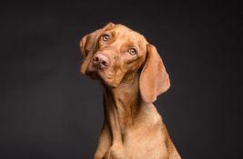 Rekordni prihodi od poreza na pse u Nemačkoj, u kasu se slilo 380 miliona evra