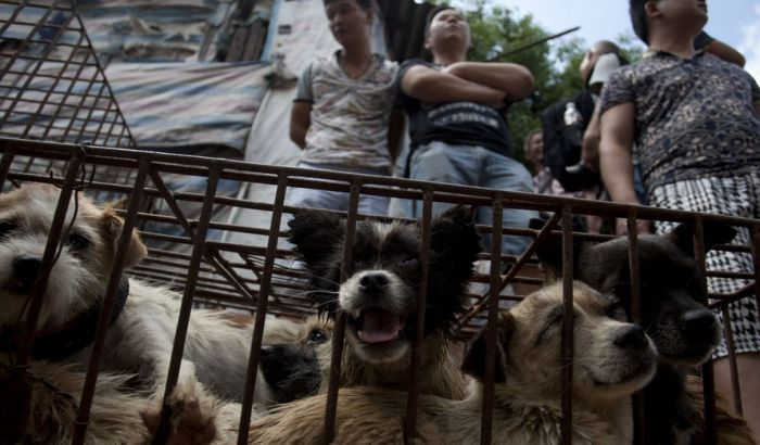 Severna Koreja: Pseće meso je zdravo i ukusno