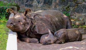 Mali nosorog rođen veštačkom oplodnjom