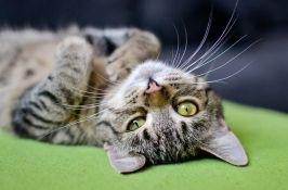 Pustili 1.000 mačaka iz azila da bi se izborili sa najezdom pacova
