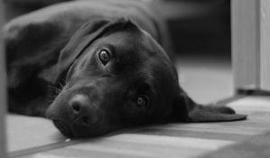 Laboratorijski potvrđena Aujeckijeva bolest kod psa