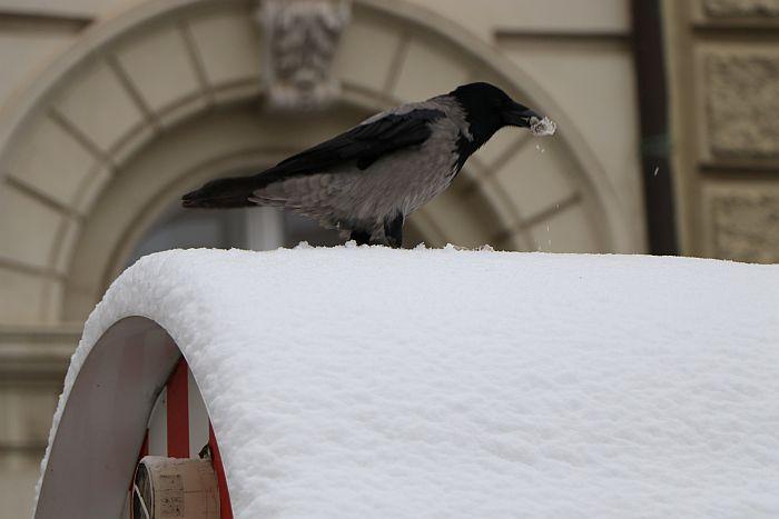 RHMZ: Sneg u Srbiji do 15. januara