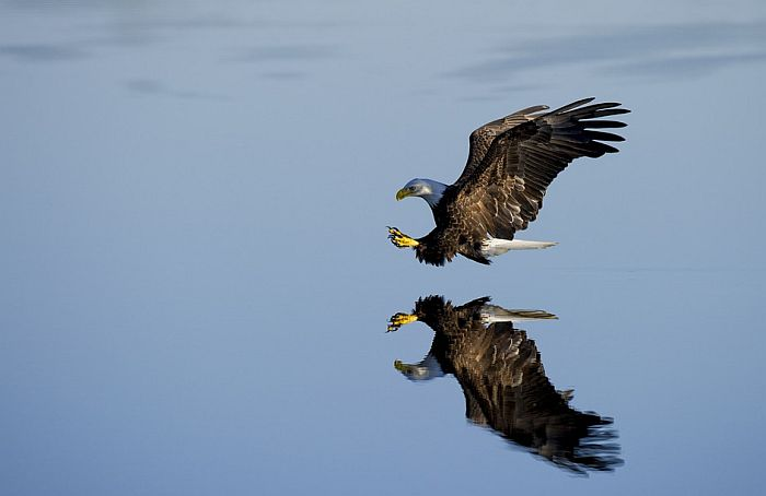 Mobilni operater oprašta dug orlova za roming
