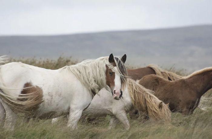 Konji sve deblji zbog klimatskih promena