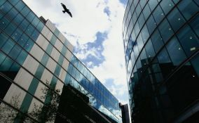 Stotine miliona ptica ugine zbog zaletanja u nebodere