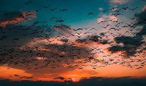 Vremenska nepogoda ubila 11.000 ptica u Montani