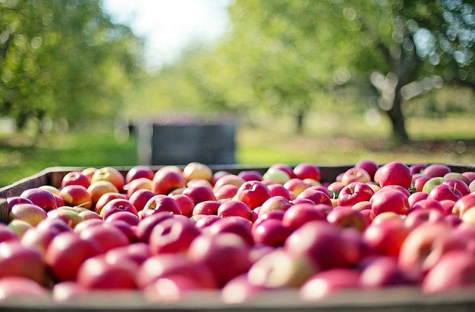 Čačansko voće ponovo može na rusko tržište
