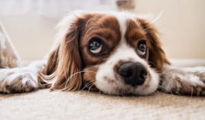 Francuski veterinari: Pse i mačke nemojte dezinfikovati alkoholom