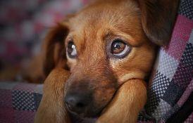 Peticiju da se ponovo dozvoli večernje šetanje pasa potpisalo 37.000 građana