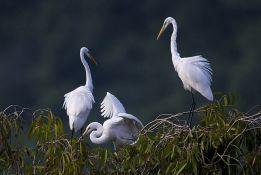 Društvo za zaštitu ptica apeluje na građane: Ne hvatajte bele rode