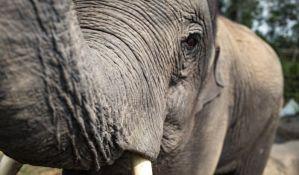 Još pet slonova stradalo pokušavajući da spasu mladunče