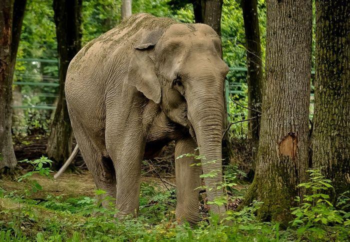 Slonovi se veoma plaše pčela i naučnici žele to da iskoriste