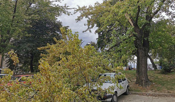 FOTO: Velika grana pala na automobile na Podbari