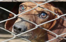 Grčka će kažnjavati zlostavljače životinja kaznom i do 15.000 evra