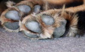 VIDEO: U stanu od 30 kvadrata pronađena 164 izgladnela psa