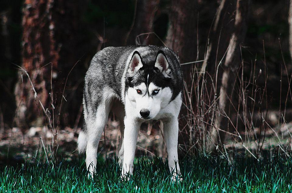 Krivična prijava protiv vlasnice psa koji je izujedao četvoro mladih u Požegi