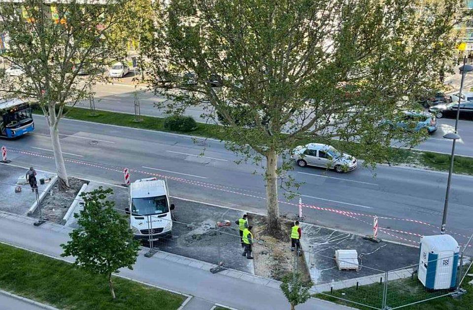FOTO: Izrezan asfalt oko drveća na Bulevaru oslobođenja