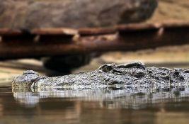 Troje dece mučilo aligatora, životinja morala da bude ubijena
