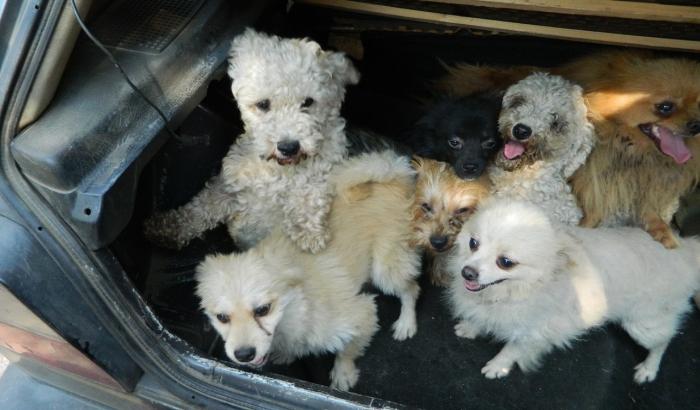 FOTO: Ukrali 20 rasnih pasa