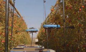 VIDEO: Napravljeni roboti koji beru samo zrelo voće i sprečavaju njegovo propadanje