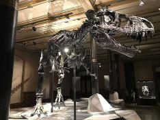 Dečak u Kanadi pronašao redak kostur dinosaurusa star 69 miliona godina