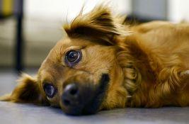 Studija: Ljudi mogu da prenesu koronu na pse i mačke
