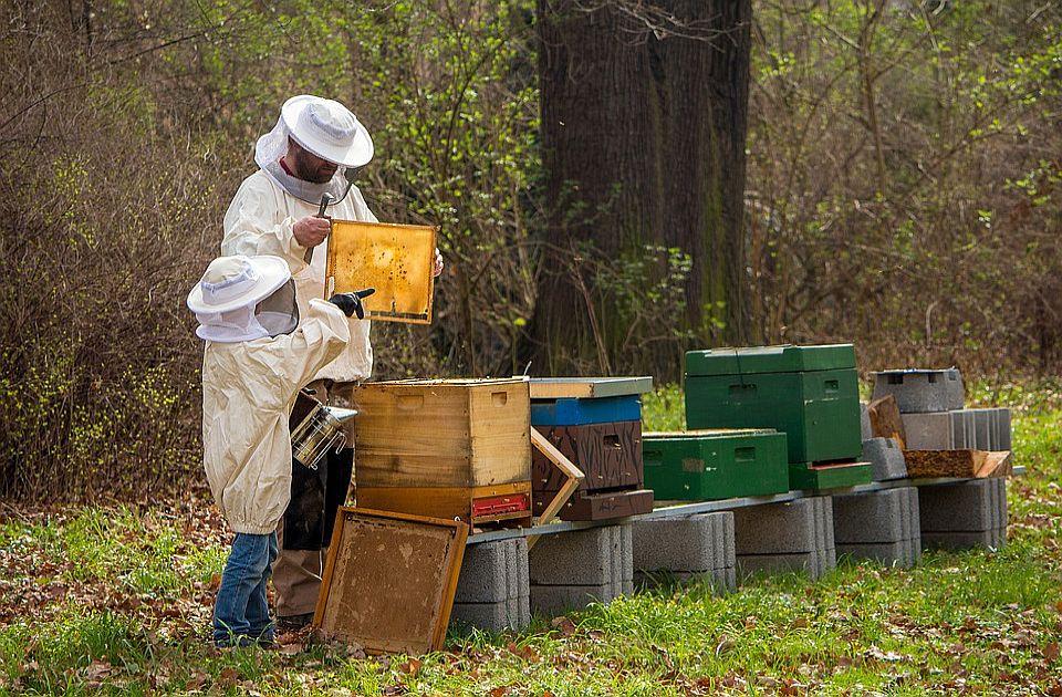 Za kupovinu novih rojeva pčela i opreme kikindskim pčelarima više od milion dinara
