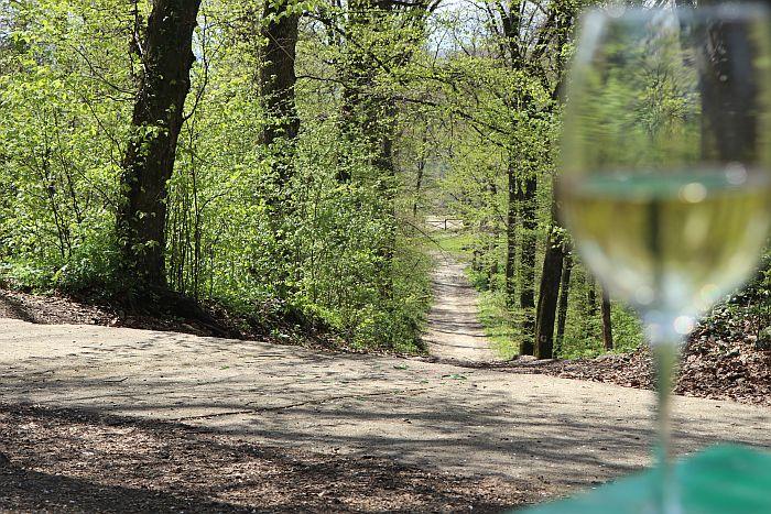 Putevima vina kroz fruškogorski deo Vojvodine