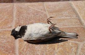 VIDEO: Ptice u ruskom gradu padaju mrtve s neba, građani krive zagađenje, 5G mrežu...
