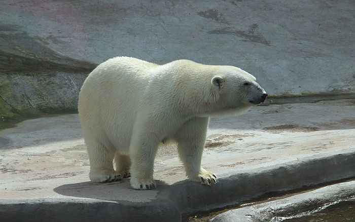 VIDEO: Žena se odbranila od polarnog medveda uz pomoć metle i đubrovnika