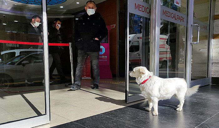 Keruša nedelju dana čekala vlasnika ispred bolnice