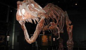 Mali tiranosaurus omogućava uvid u razvoj moćnog T-reksa