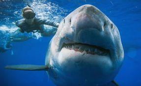 VIDEO: Ronioci plivali sa najvećom belom ajkulom ikada snimljenom