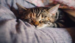 Mačka krijumčarila mobilne telefone u zatvor