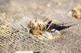 Upozorenje naučnika: Insekti masovno izumiru