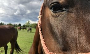 Turistički biseri Vojvodine (2): Konji Karađorđeva